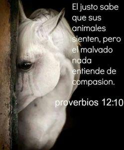 proverbios 12 10