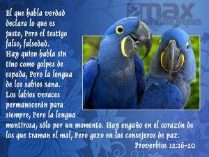 proverbios 12 16