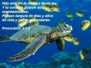 proverbios 3 1