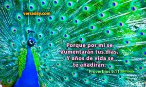 proverbios 9 11